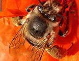 Quiz on Bees (1-5)