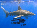 The quiz on Sharks