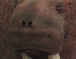The quiz on walruses (1-46)