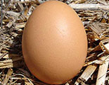 The quiz on battery cage farming (1-49)